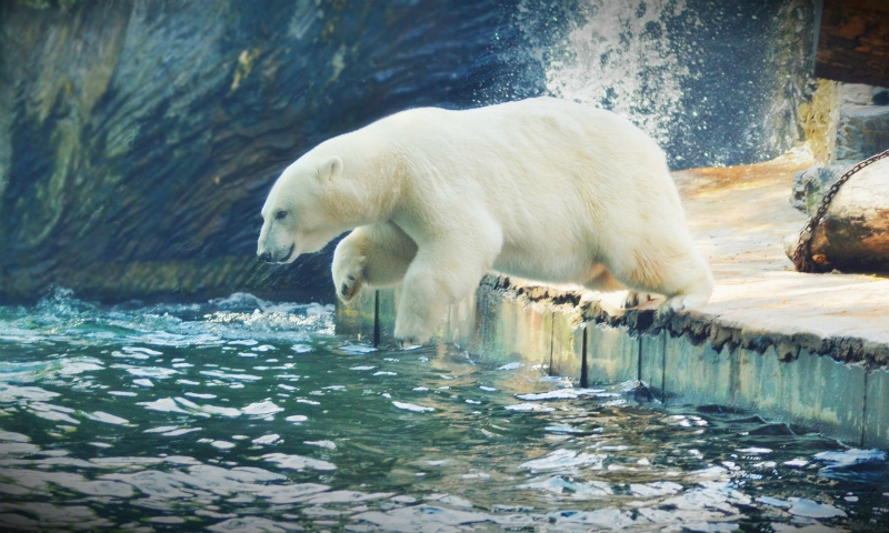 Amazing Facts About Polar Bears