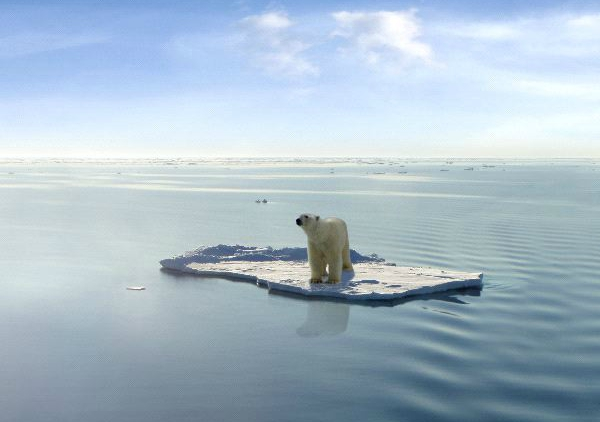 Why Do Polar Bears Migrate