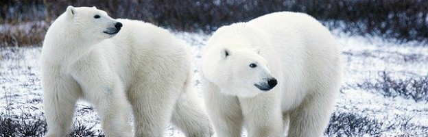 Polar Bear Names
