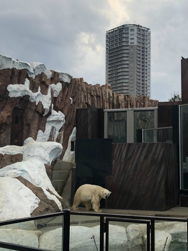 Polar Bears in Captivity