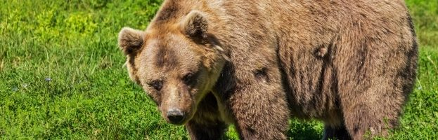 The Best National Parks Where You Can See Bears In The USA