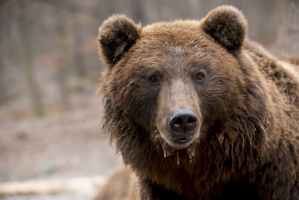 best national parks to see bears usa